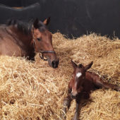 Getting ready for the foaling season