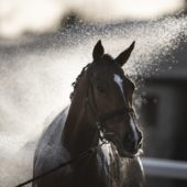 Essential Guide to Electrolytes for Horses