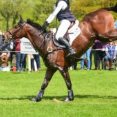 Equine Joint Supplement Choice