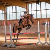 All Tie-Up? Managing Typing Up in Performance Horses