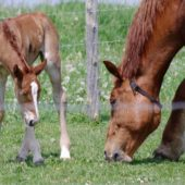 Make The Most of Your Mare's Milk Quality