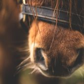 Unwanted Biting or Chewing in Horses