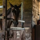 Essential Supplements for Racehorses