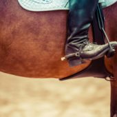 Valuable Oil Supplement to Improve your Horse's Performance