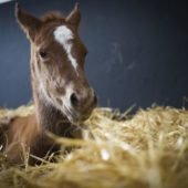 Foaling Season Ready? – Tips for Tackling your Foaling Kit