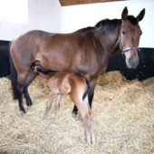 How to Improve a Mare's Milk