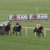 Record entries in Foran Equine Irish EBF Auction Series Final Naas Racecourse, Sunday October 20
